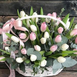 Корзина 59 нежных тюльпанов R983