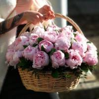 Корзина цветов, 45 крупных розовых пионов R274