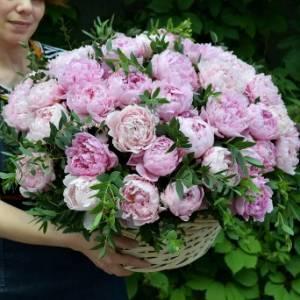 65 розовых пионов в корзине R961