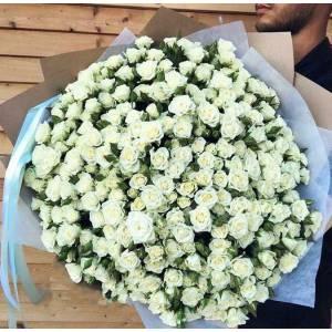 101 ветка белых кустовых роз в крафте R318